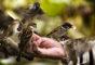 1 kwietnia – Dzień Ptaków